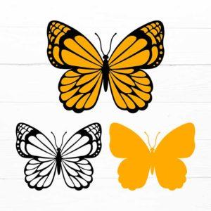 Butterfly SVG V5